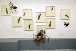 SCARAMELLA_Nepenthes_2012